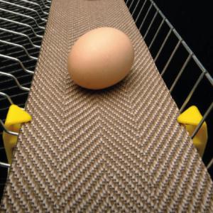 Лента для яйцесбора NSPH-B полипропиленовая
