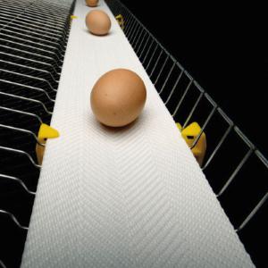 Лента для яйцесбора NSPH-W полипропиленовая