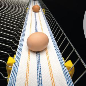 Лента для яйцесбора NSPL полипропиленовая