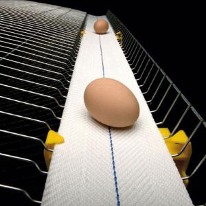 Производство ленты для яйцесбора